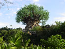 animal kingdom tree of life desktop wallpaper