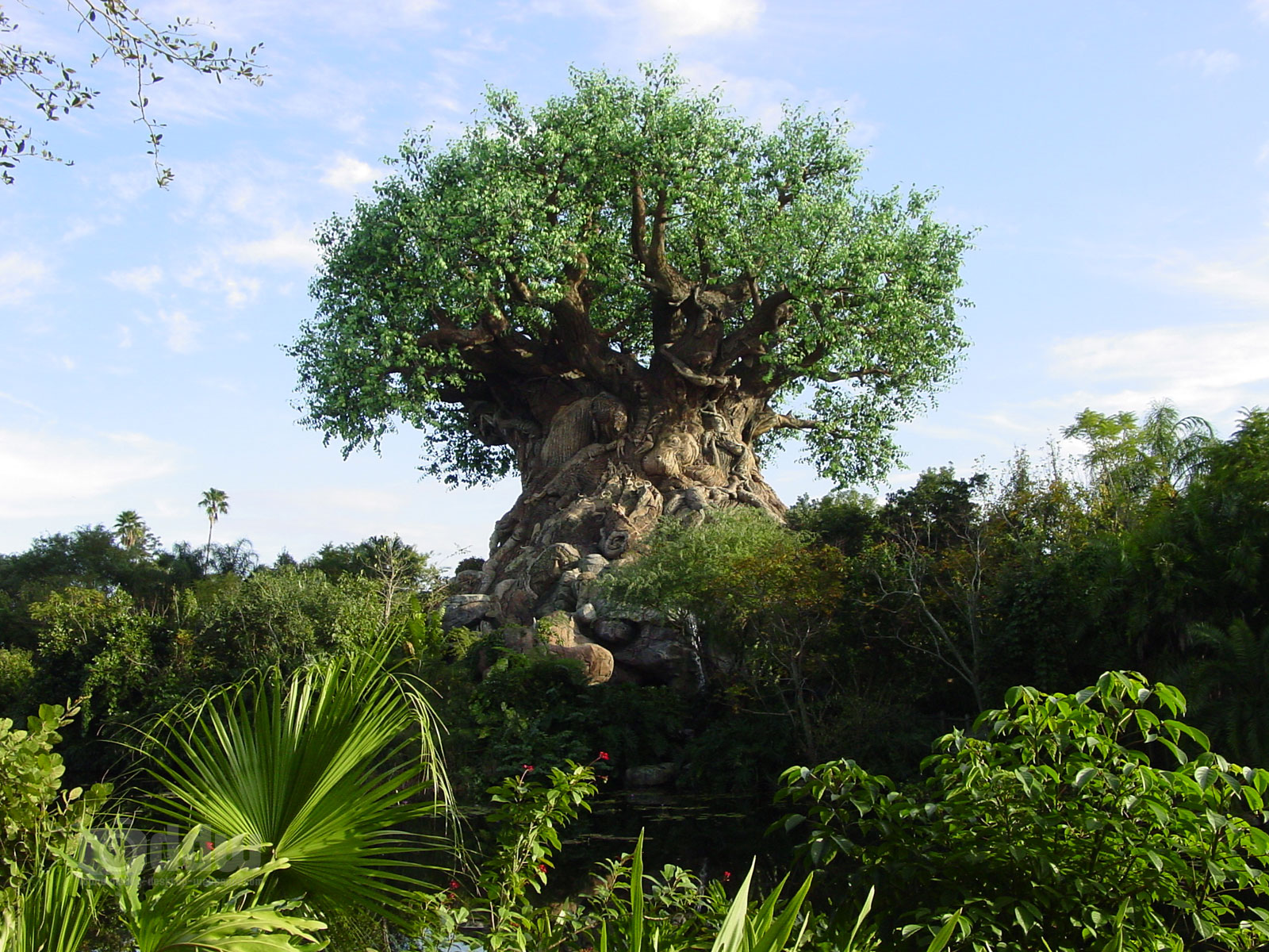 Animal Kingdom  http://mapq.st/v1ieqC